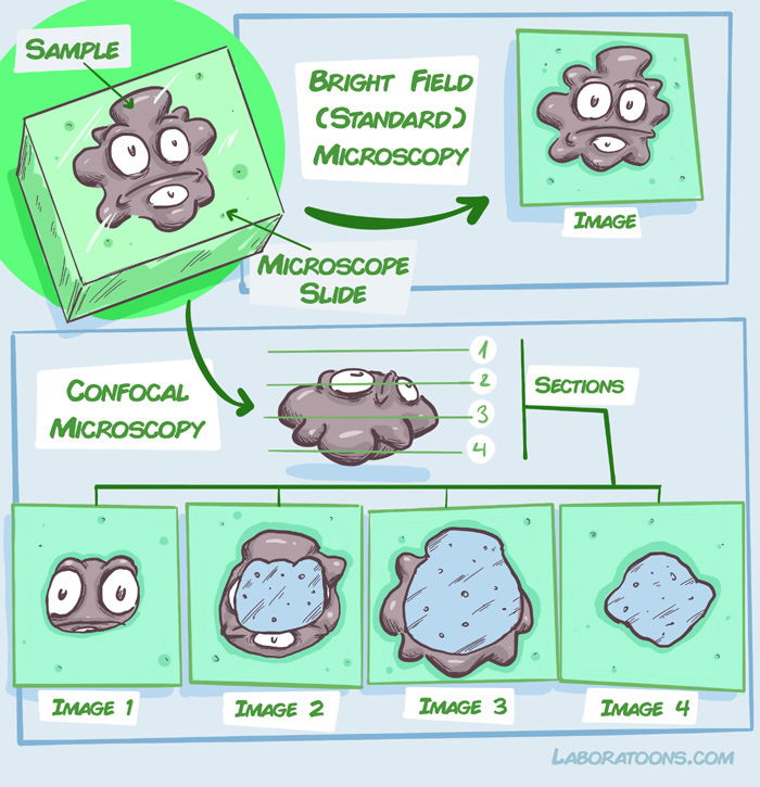 Briht field vs confocal microscopy
