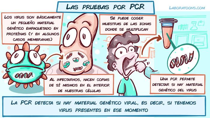 Test Coronavirus pcr anticuerpos 1